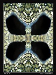 """Kaleidoclams"". by Bea & Stef Primatesta"