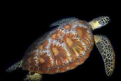 Green Turtle by Martin Dalsaso