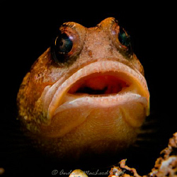 """Say ahhhh"" Canon G10, single macro lens. Inon s2000 strobe by Andrew Macleod"
