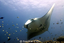 Shot with a 12mm lens in Koh Bon, Thailand. The Manta's h... by Spencer Finn