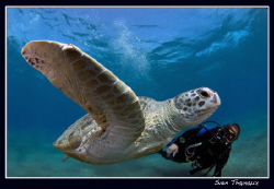 Green turtle and Ray by Sven Tramaux