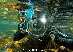 my dive buddy Jean getting up close to a bluebottle