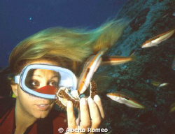 Girldiver and mediterranean wrasses (Coris julis male). S... by Alberto Romeo