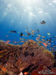 Reef Scene - Moyo island, Indonesia (Canon G9, Inon D2000w) by Marco Waagmeester