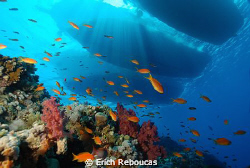Coral Garden on Jackson Reef and moored boats above.. by Erich Reboucas