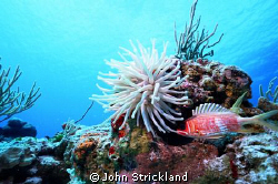 Cozumel, 15MM, Nikonos by John Strickland