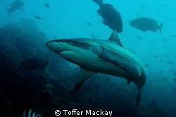 Beqa Adventure Divers Shark Dive 1/60 sec at f/10 28mm... by Toffer Mackay