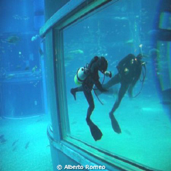 The diver in the aquarium is wiping the glass that reflec... by Alberto Romeo