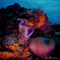 This image of sponges and soft corals was taken at Palanc... by Steven Anderson
