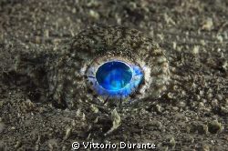 Eye of a Fishing-frog by Vittorio Durante