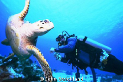 Cozumel 15mm by John Strickland