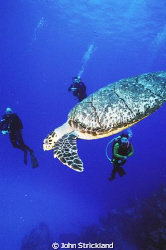 turtle cozumel nikonos 15mm by John Strickland