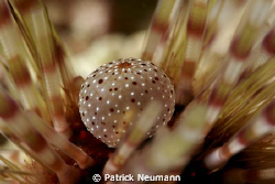 craw of an sea-urchin ... amazing nature ... no crop by Patrick Neumann