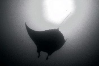 Manta / Mozaqmbique . F100 &17-35mm. by Gregory Grant