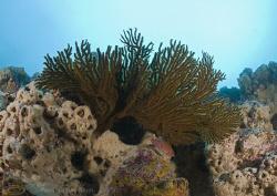 Sea fan. Galapagos. D200, 16mm. by Derek Haslam