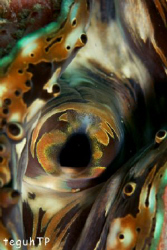 Giant Clam pattern, Canon EOS 400D, Sea and Sea Housing a... by Teguh Tirtaputra