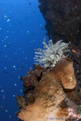 """Colours of the Reef"" Bunaken National Park - Tokina 10-17 by Debi Henshaw"