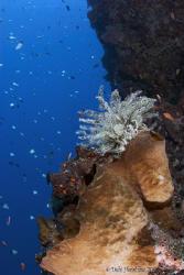 """""""Colours of the Reef"""" Bunaken National Park - Tokina 10-17 by Debi Henshaw"""