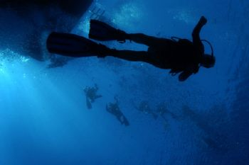Red Sea, safety stop -m housed Nikon D100 by Steve Baillie