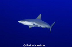 white tip shark taken in fesdhoo atol nikon d2x 12-24mm by Puddu Massimo