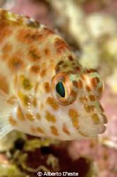 Hook Fish by Alberto D'este