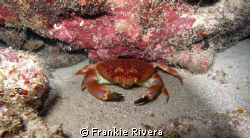 King Crab @ Falling Rock, Guanica PR by Frankie Rivera
