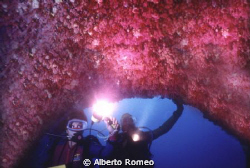 A very rare cave with the ceiling full of  Red Coral (Cor... by Alberto Romeo