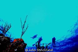 nikonos 15mm by John Strickland