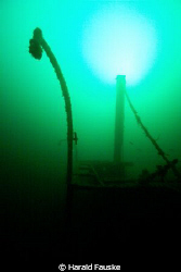 School of saithe at 60m in voldafjorden by Harald Fauske
