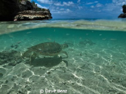 Wow...what a caribbean beauty !!! I was on my way to div... by Dave Benz