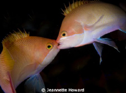 Kissing or fighting in the dark off a wreck in Sabang, Ph... by Jeannette Howard