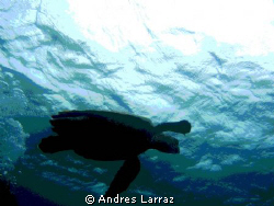 TORTUISE! by Andres Larraz