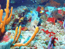 Cedral Wall, Cozumel, MX  Have to love diving in Cozumel by Cheri Denn