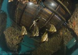 Bat fish, under KBR jetty. D200, 10.5mm. by Derek Haslam
