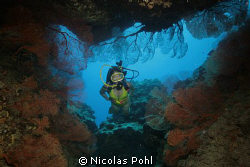 DEEP OCEAN CAVE FILLED WITH COLORFUL SEA FANS AND MY LOVE... by Nicolas Pohl