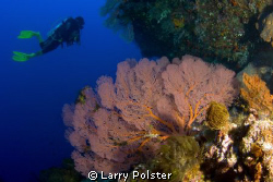 Beautiful walls in the Banda Sea. D300, Tokina 10-17 by Larry Polster