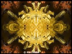 Echnioderm - Feather Star. Mirror image using CS4. Cano... by Rhi Dobbie