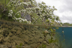 Tree. Split level. Capernwray. D3, 16mm. by Derek Haslam
