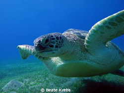 Turtle right before landing , taken with Canon S70 by Beate Krebs