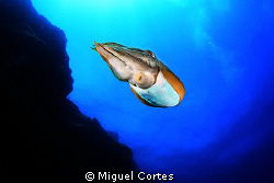Cuttlefish. by Miguel Cortes