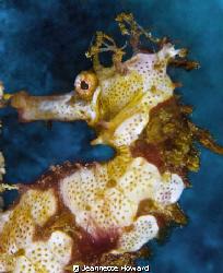 Seahorse face :)  Sabang, Phillipines      Nikon D70 105 ... by Jeannette Howard