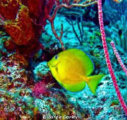 Photo taken May 2009 in Grand Bahamas with a Canon SD 550. by Bonnie Conley
