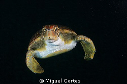 Green turtle in the dark. by Miguel Cortes