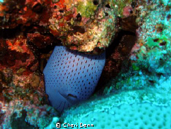 The fish really believes she is hidden! by Cheri Denn