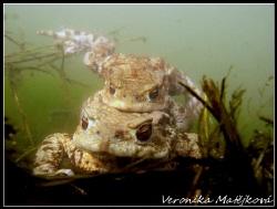 """Mr.and Mrs. Frogs. They """"produce"""" froggy baby :) by Veronika Matějková"""