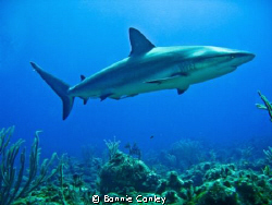 Shark Junction, Grand Bahamas.  Photo taken May 2009 with... by Bonnie Conley