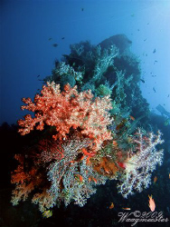 Coral encrusted bow gun of the USAT Liberty Shipwreck - T... by Marco Waagmeester