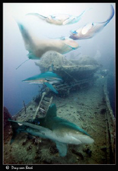 The Thistlegorm on a good day. by Dray Van Beeck