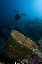 Sponge with diver, Jack Neil Beach, Utila. Canon EOS 350d... by Tobias Reitmayr