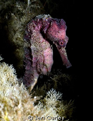 """I Heart Seahorses""  At the end of a typical dive at Blue... by Jeri Curley"